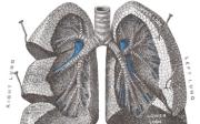 Chronická obstrukční plicní nemoc